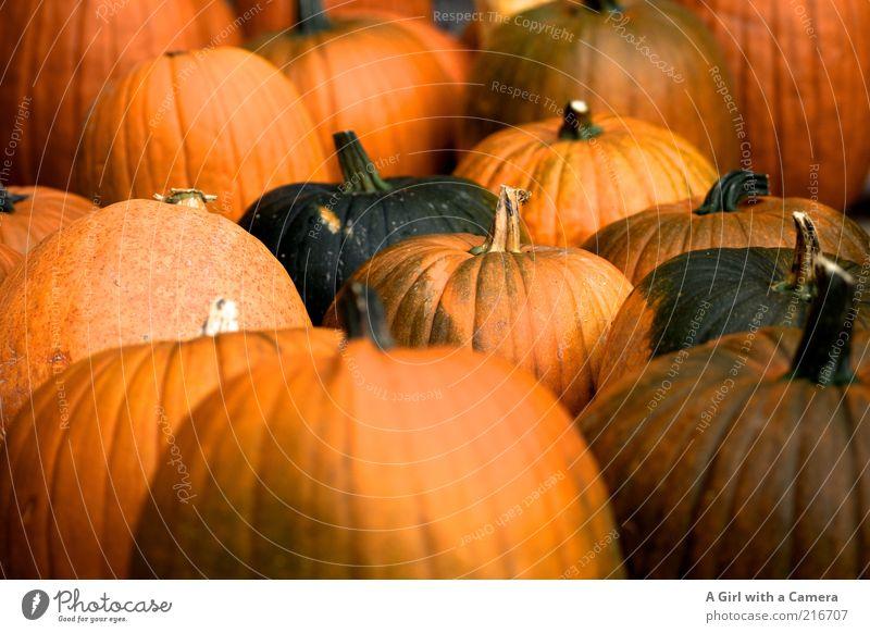 Gruselgemüsearmee Natur Herbst orange liegen Frucht Lebensmittel Fröhlichkeit Dekoration & Verzierung rund Freundlichkeit Gemüse Bioprodukte saftig Halloween herbstlich Kürbis