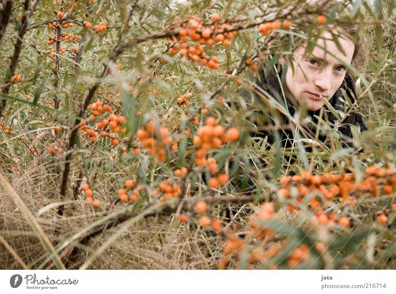 im Sanddornbusch III Natur Jugendliche Mann Pflanze Junger Mann Erwachsene Gesunde Ernährung Gesundheit orange maskulin Frucht Sträucher geheimnisvoll lecker verstecken Vorsicht