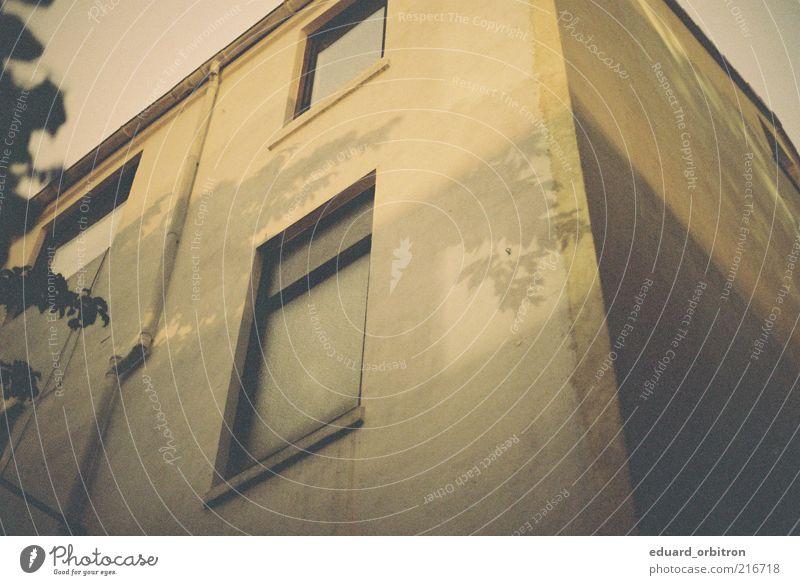 Outro Baum Blatt Haus Mauer Wand Fassade Fenster alt eckig retro Farbfoto Gedeckte Farben Außenaufnahme Menschenleer Morgendämmerung Schatten Kontrast
