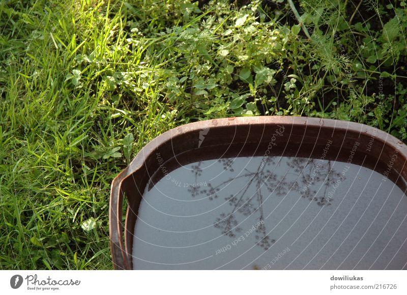 Natur Wasser Blume grün blau Pflanze Sommer ruhig Blatt Erholung Wiese Gras Garten nass Wachstum nah