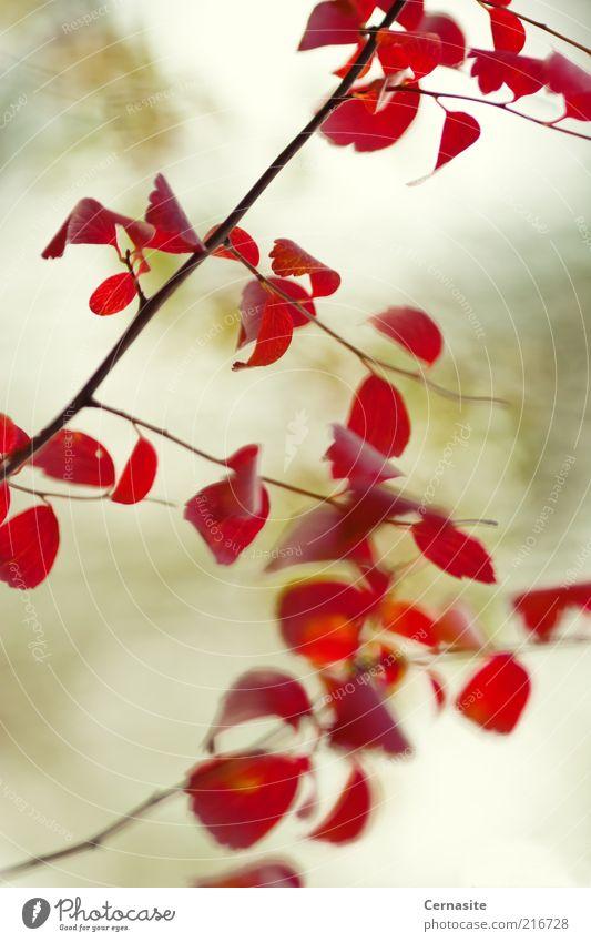 Natur weiß grün schön Baum rot Pflanze Ferne Umwelt Landschaft Herbst Zusammensein außergewöhnlich wild natürlich einzigartig