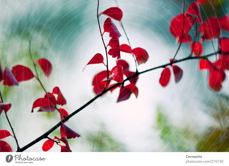 Natur blau grün schön Baum rot Pflanze Blatt Ferne Umwelt Landschaft dunkel Herbst Gefühle Stimmung außergewöhnlich