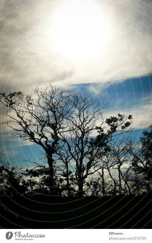 Geblendet Natur Landschaft Schönes Wetter Dürre Baum Sträucher Holz gruselig heiß rund blau schwarz weiß Baumkrone Sonne Wolkenhimmel Ast verzweigt blenden