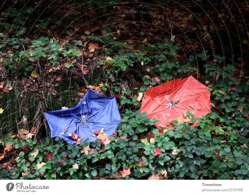 Bunte Färbung Natur blau rot Pflanze Blatt Farbe Herbst paarweise kaputt Müll Regenschirm Herbstlaub unbrauchbar achtlos