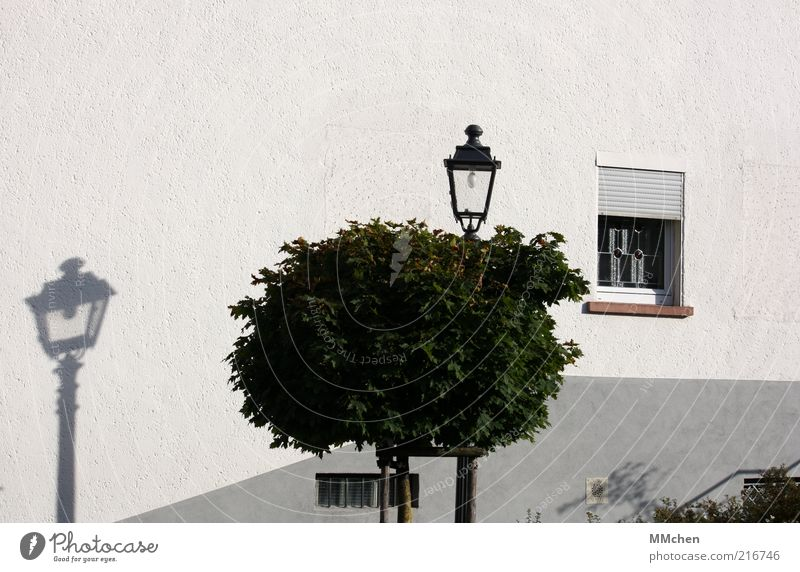 Fake Baum Haus Fassade ruhig Schatten Laterne Baumkrone weiß Fenster Mauer Farbfoto Außenaufnahme Textfreiraum oben Tag Schattenspiel Menschenleer