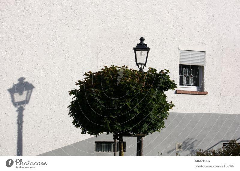 Fake weiß Baum ruhig Haus Fenster Mauer Fassade Laterne Baumkrone Schattenspiel