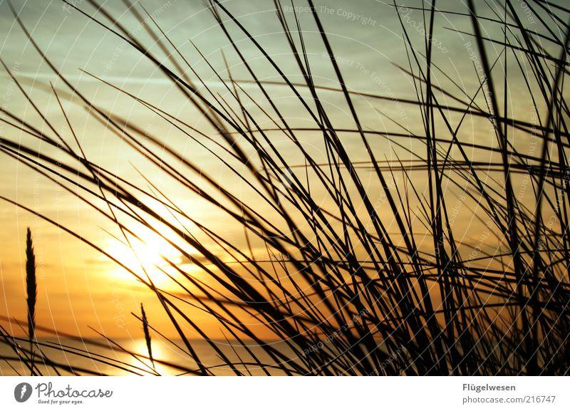 Weißt du noch im letzten Jahr? schön Sonne Meer Strand Ferien & Urlaub & Reisen Küste Horizont Ausflug Tourismus Halm Schönes Wetter Sonnenuntergang