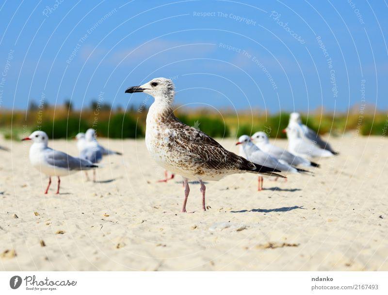 Möwe steht auf dem Sand Freiheit Sommer Sonne Strand Meer Menschengruppe Natur Landschaft Tier Himmel Küste Vogel frei natürlich wild blau weiß Fliege sonnig
