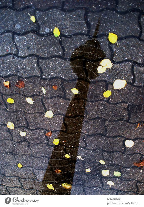 sei berlin Wasser Blatt Berlin Stil Wetter Platz stehen Turm Urelemente Zeichen Bürgersteig Wahrzeichen Im Wasser treiben Herbstlaub Pfütze Sehenswürdigkeit