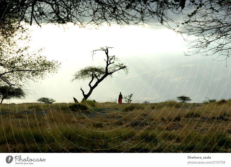 ERLEUCHTET Mensch Natur Himmel Baum Ferien & Urlaub & Reisen ruhig Gras träumen Landschaft Zufriedenheit Stimmung Hoffnung Afrika beobachten geheimnisvoll Gelassenheit