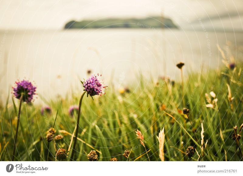 Färöer - Ein Rückblick Natur Blume Meer Pflanze Wiese Blüte Gras Landschaft Küste Wetter Umwelt Insel Klima Hügel Blühend Lebewesen