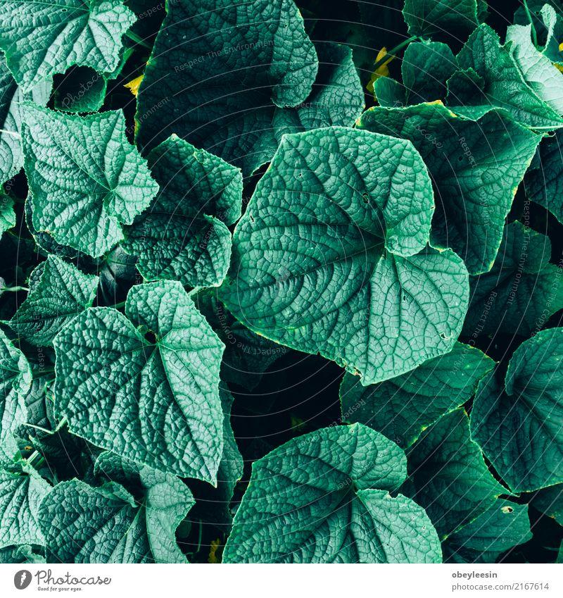 Kreatives Layout aus grünen Blättern. Flach legen. Natur-Konzept Sommer Garten Tisch Kunst Pflanze Baum Blatt Wald Fluggerät Mode Wachstum frisch hell trendy