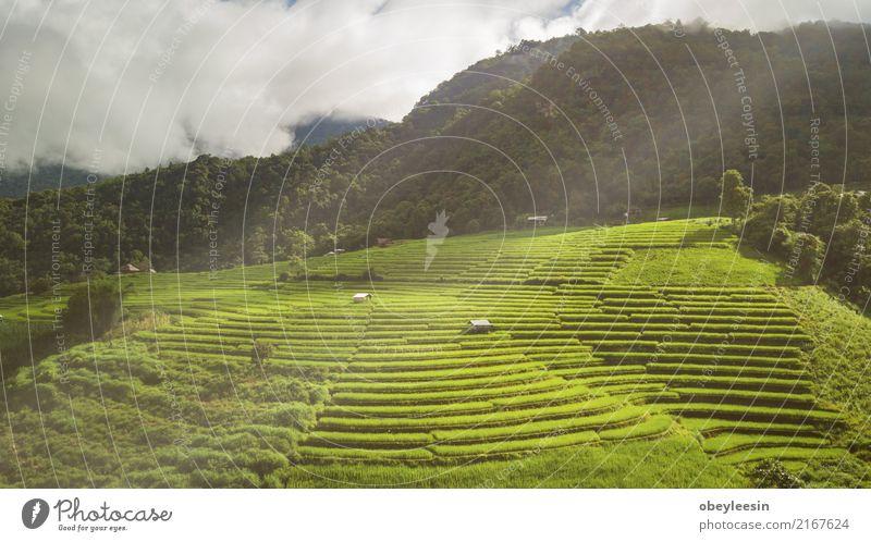 Draufsicht der Reisreisfelder in Nord-Thailand Natur Ferien & Urlaub & Reisen Pflanze Sommer Landschaft ruhig Berge u. Gebirge Umwelt Wiese natürlich Gras