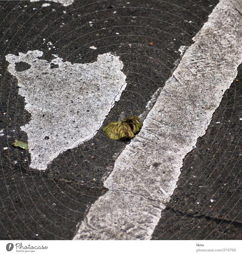 [HH10.1] - Lebenslinien III Verkehrswege Straße alt authentisch Straßenbelag Teer Blatt grau Asphalt Linie Farbfoto Gedeckte Farben Außenaufnahme