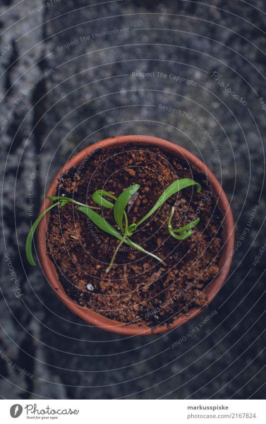 Kräuteraufzucht zur Selbstversorgung Lebensmittel Kräuter & Gewürze Blumentopf züchten Ernährung Essen Bioprodukte Vegetarische Ernährung Diät Fasten Slowfood