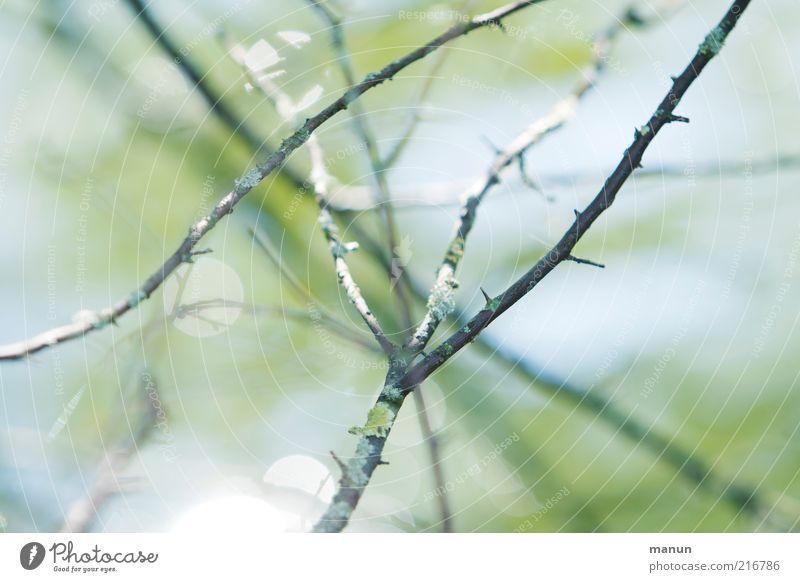 Stockwerk Natur schön Baum Herbst hell Umwelt ästhetisch Sträucher Wandel & Veränderung Vergänglichkeit natürlich Zweige u. Äste herbstlich