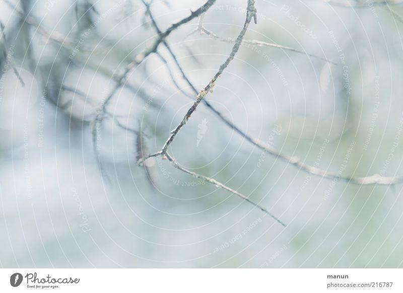 Zweigstelle Umwelt Natur Herbst Winter Baum Zweige u. Äste herbstlich ästhetisch frisch hell natürlich Originalität schön kalt Vergänglichkeit Farbfoto