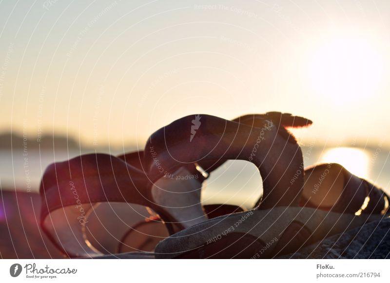 Verloren und vergessen Natur Sonne Sommer Ferien & Urlaub & Reisen ruhig gelb Herbst Gefühle See Schuhe Stimmung hell Umwelt Bekleidung leuchten Seeufer