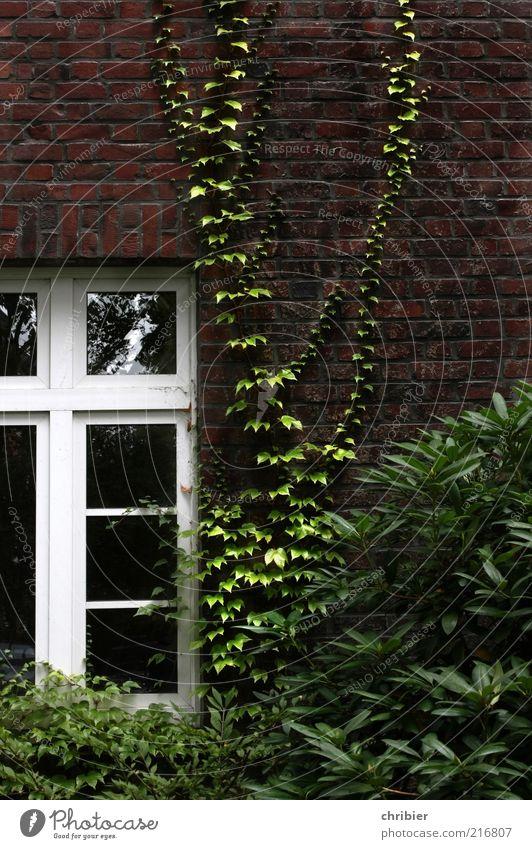 Friedliche Übernahme*** [HH 10.1]*** Natur grün Pflanze rot ruhig Haus Wand Fenster Garten Mauer Architektur Umwelt Fassade Wachstum Romantik einzigartig