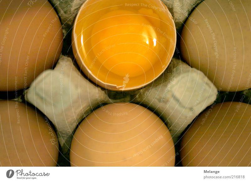 Ei ei ei Ernährung gelb Lebensmittel Sauberkeit Anschnitt Bildausschnitt roh Eigelb Packung Skandal aufgeschlagen Protein Probe Eiklar Hühnerei