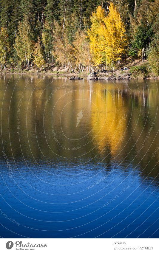 schönes wetter Umwelt Natur Landschaft Wasser Pflanze Baum See authentisch Idylle Farbfoto Außenaufnahme Textfreiraum unten Waldrand Herbstlaub herbstlich