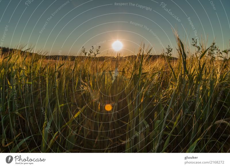 Himmel Natur Pflanze Sommer schön Sonne Landschaft dunkel Wärme Wiese Gras oben hell Feld Aussicht malerisch