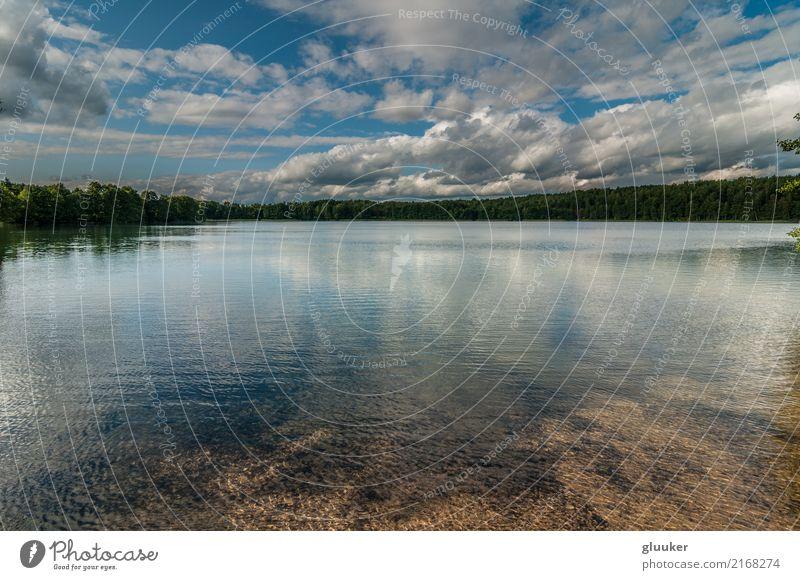 malerischer Waldsee unter einem blauen bewölkten Himmel schön Erholung Sommer Spiegel Umwelt Natur Landschaft Wasser Wolkenloser Himmel Schönes Wetter Blitze