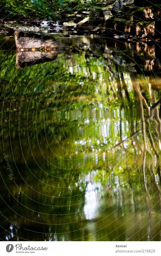 Ruhiges Wasser Umwelt Natur Landschaft Pflanze Sonnenlicht Sommer Klima Schönes Wetter Baum Sträucher Grünpflanze Wald Flussufer Bach Stein nass schön grün