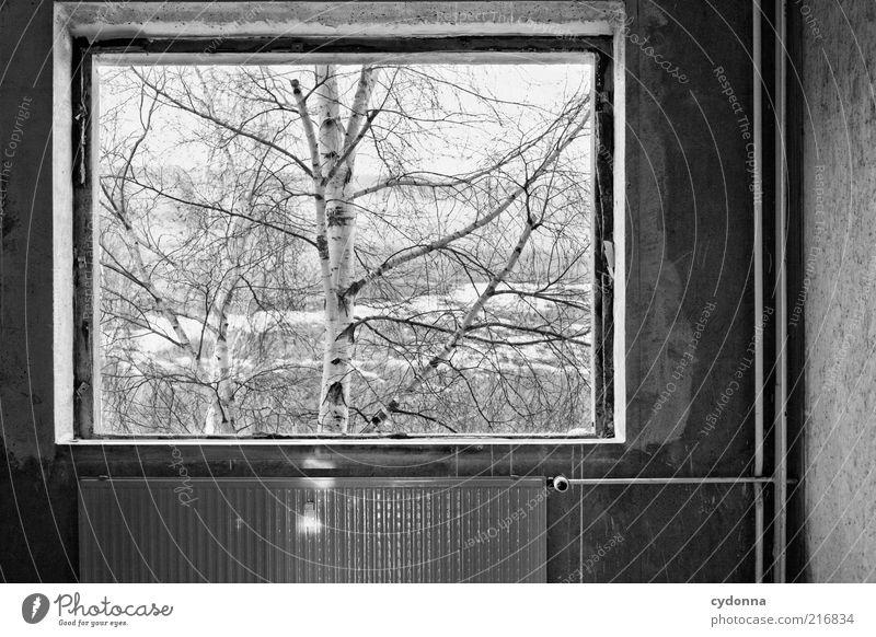 Bild im Bild ruhig Häusliches Leben Natur Winter Baum Mauer Wand Fenster ästhetisch Einsamkeit Idee kalt Perspektive stagnierend träumen Vergänglichkeit