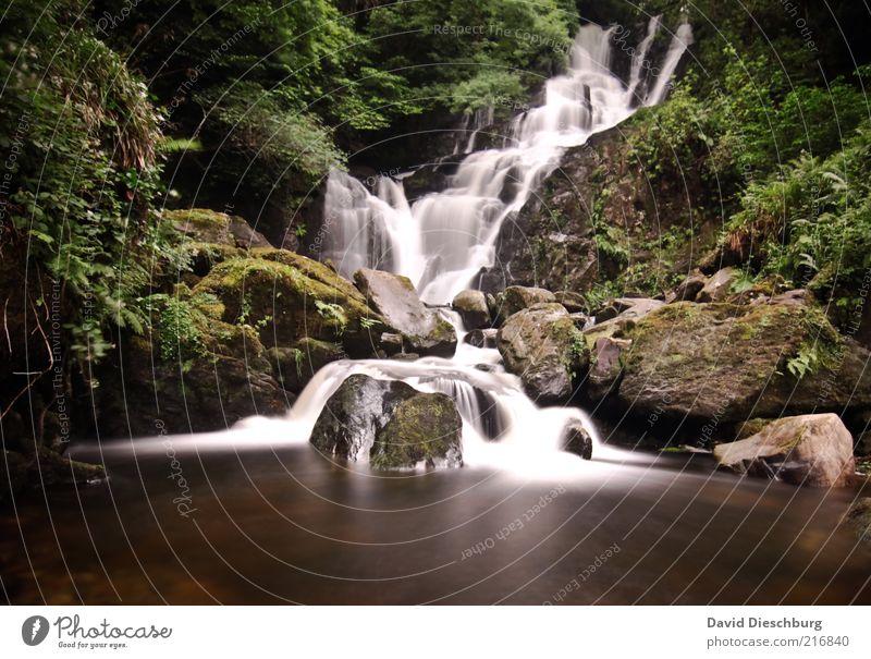 Killarney waterfalls II Natur Landschaft Pflanze Wasser Frühling Sommer Baum Moos Grünpflanze Wald Felsen See Bach Fluss Wasserfall braun grün