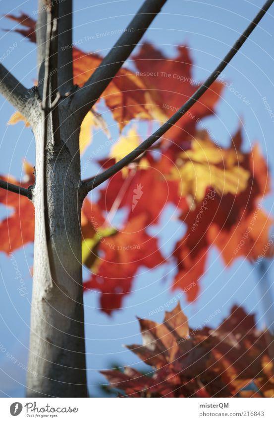 Herbstspaziergang I Natur Blatt Umwelt ästhetisch Ende Ast natürlich Verfall Jahreszeiten Baumstamm Zweig Anschnitt Bildausschnitt Herbstlaub Ahorn friedlich