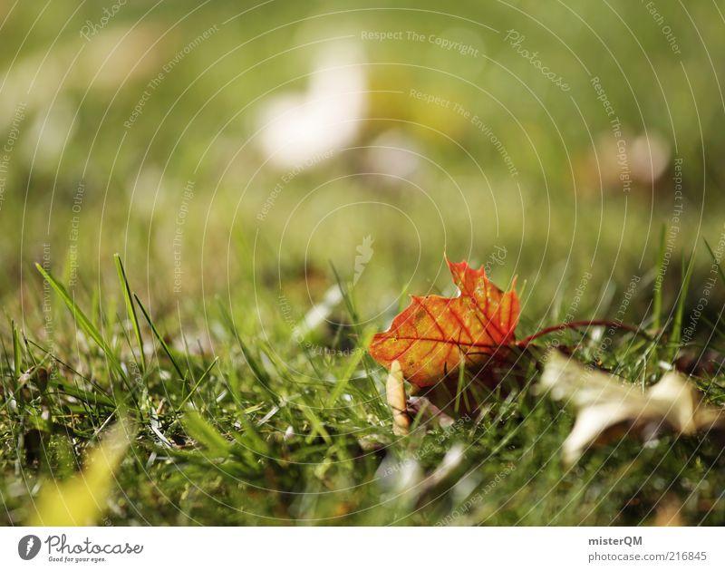 Herbstspaziergang II Umwelt Natur Pflanze ästhetisch ruhig Frieden friedlich Herbstlaub herbstlich Herbstfärbung Herbstbeginn Blatt Ahorn Rest liegen Gras Wiese