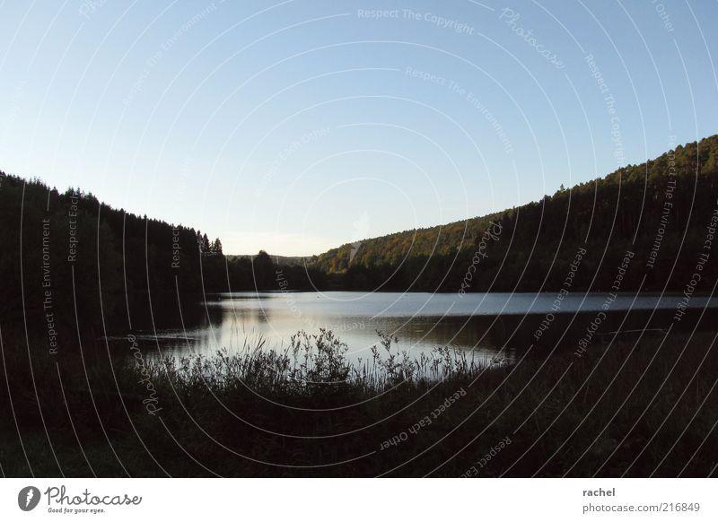 Schwindendes Licht Natur Gelassenheit Waldsee Gewässer Abenddämmerung Dämmerung Gras hügelig Hügel Seeufer dunkel Einsamkeit ruhig Idylle Schatten beruhigend