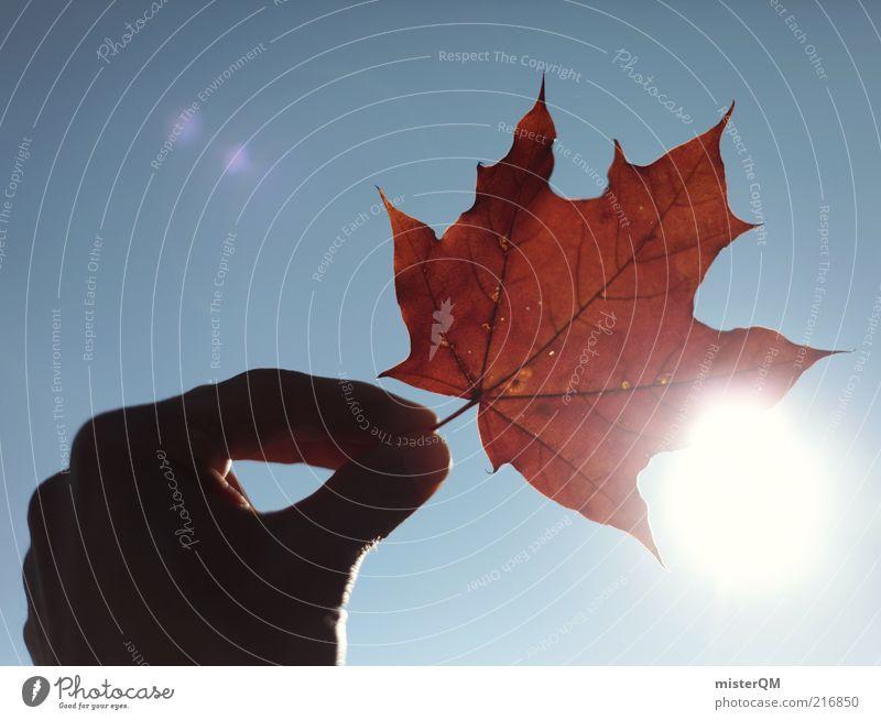 Herbstspaziergang III Natur Hand Sonne rot Freude Blatt Freiheit Zufriedenheit Beleuchtung Finger Fröhlichkeit ästhetisch Kindheit festhalten