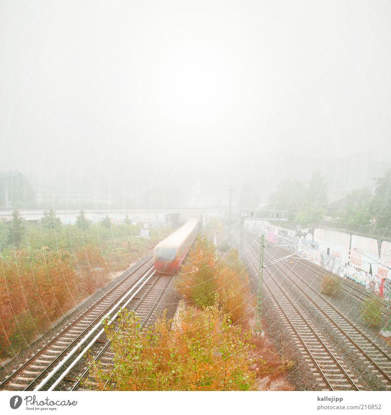 herbstfahrplan Himmel Herbst Nebel Baum Sträucher Verkehr Verkehrsmittel Verkehrswege Personenverkehr Öffentlicher Personennahverkehr Schienenverkehr Bahnfahren