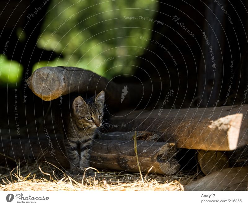 ausblick Tier Haustier Katze 1 Holz stehen frei natürlich Neugier niedlich schön Farbfoto Außenaufnahme Menschenleer Morgen Kontrast Schwache Tiefenschärfe