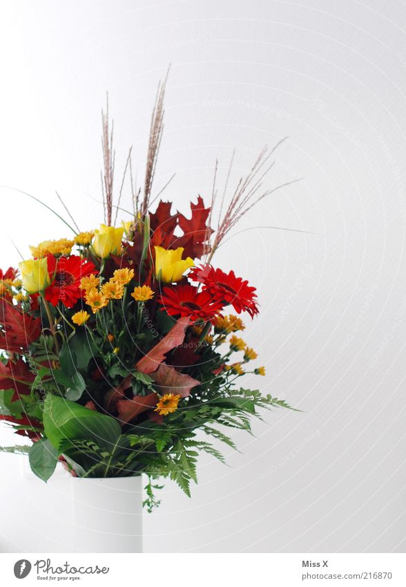 Blumen für Mia schön Pflanze Blume Blatt Blüte Rose Dekoration & Verzierung Blühend Blumenstrauß Duft Blumenvase