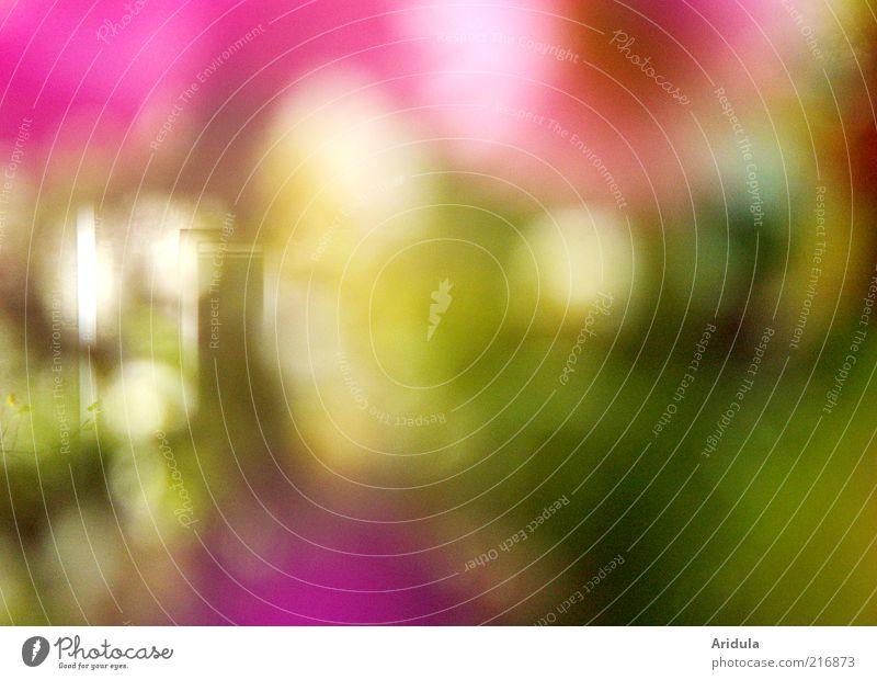 dort am Fenster Natur Pflanze Blume Blühend mehrfarbig rosa geheimnisvoll Durchblick Außenaufnahme Unschärfe violett abstrakt Hintergrundbild Textfreiraum
