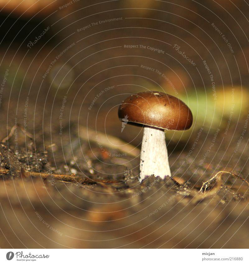 Cheer upLonely Mushroom! |Be Awesome Erde Einsamkeit Pilz klein braun Pflanze Natur Herbst Unschärfe winzig essbar ungenießbar Gift Pilzhut ungesund Sommer