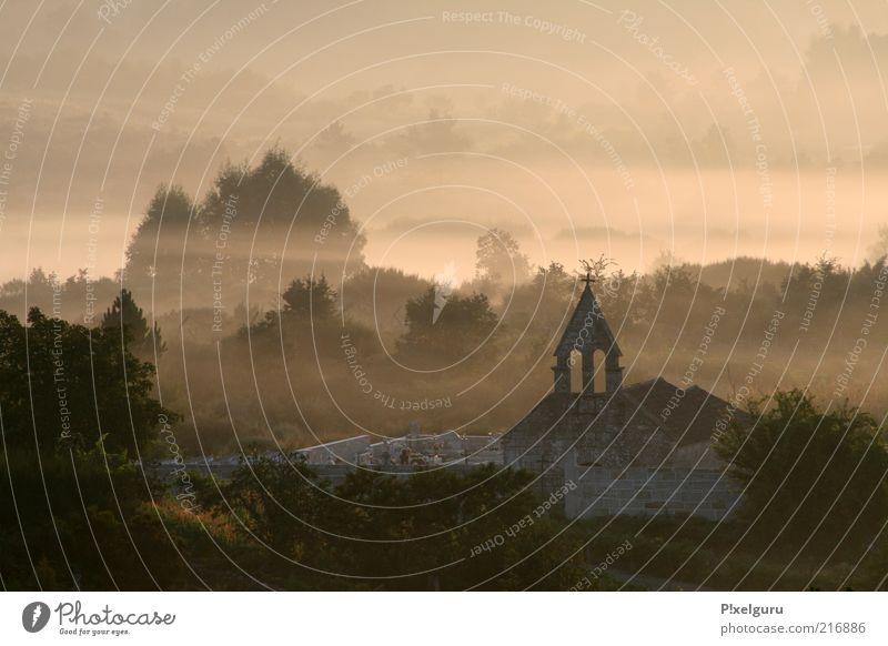Stairway to Heaven Umwelt Natur Landschaft Pflanze Wolken Sonnenaufgang Sonnenuntergang Sommer Schönes Wetter Nebel Baum Wald Hügel Stimmung ruhig Farbfoto