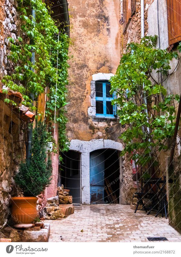 Fenster zum Hof alt Pflanze blau Farbe grün Blume Haus ruhig Wärme Architektur Wand Frühling Holz Mauer Stein