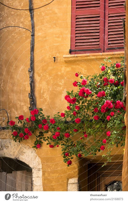 Wand, Kletterrosen, Fenster Sommer Haus Schönes Wetter Blume Rose Provence Frankreich Dorf Kleinstadt Altstadt Mauer Fassade Tür alt authentisch historisch gelb