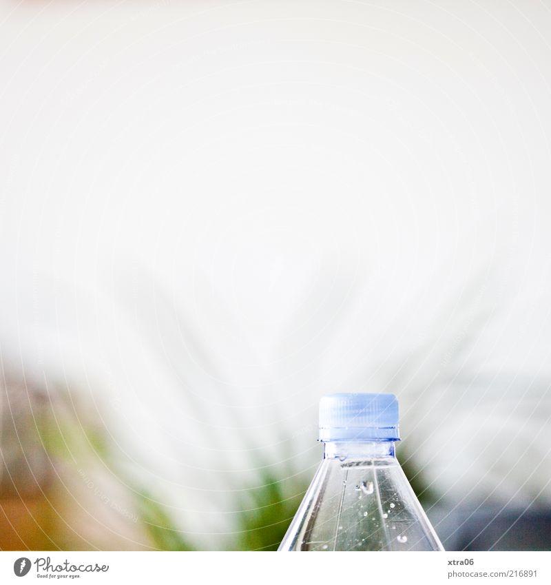 durst? Flasche authentisch Flaschenhals Wasserflasche Wand Pflanzenteile Wassertropfen Farbfoto Innenaufnahme Textfreiraum oben weiß hell Textfreiraum Mitte