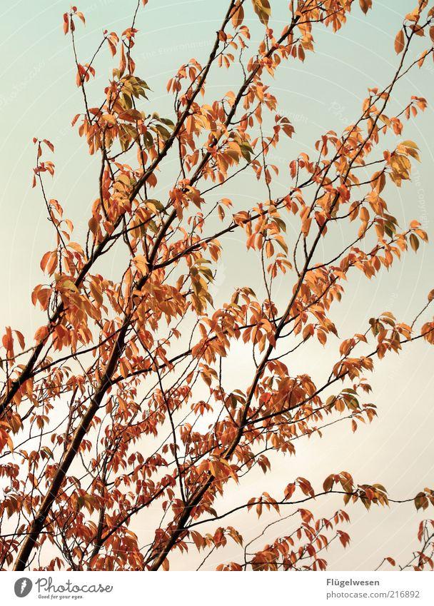 Christoph Maria Herbst Baum Pflanze Blatt Frühling Sträucher Jahreszeiten Schönes Wetter Blauer Himmel November Herbstlaub Oktober Laubbaum Zweige u. Äste Natur