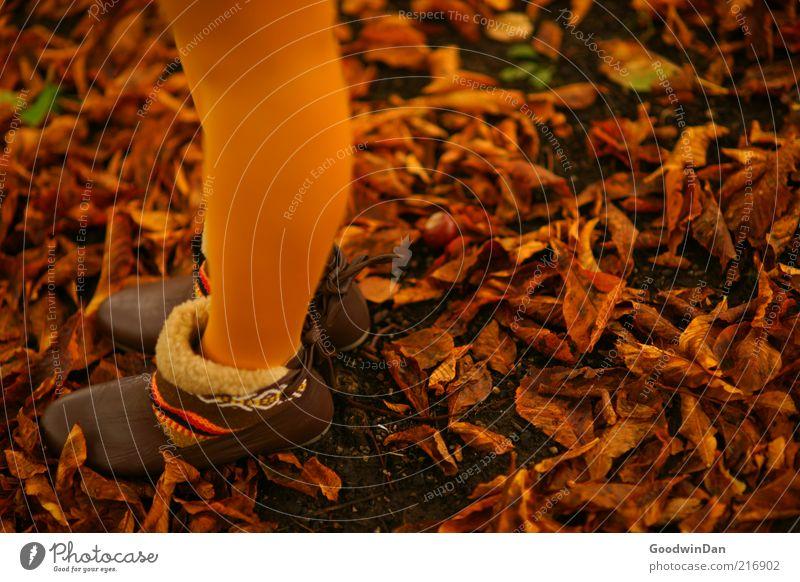 Herbstgold. IV Frau Mensch Natur Jugendliche schön kalt feminin Schuhe Stimmung braun orange Erwachsene Umwelt