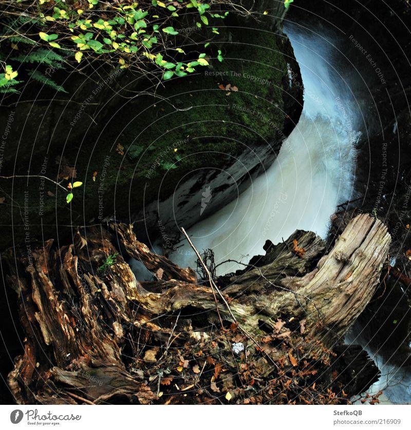 fallendes Wasser Natur Pflanze Erholung Herbst Bewegung Freiheit Holz Stein Landschaft Kraft Umwelt Sträucher England harmonisch Wasserfall