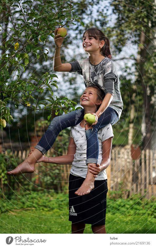 Apfelernte Natur Baum Mädchen Umwelt Herbst Gesundheit Glück Garten Lebensmittel Arbeit & Erwerbstätigkeit Frucht Ernährung Kindheit Fröhlichkeit