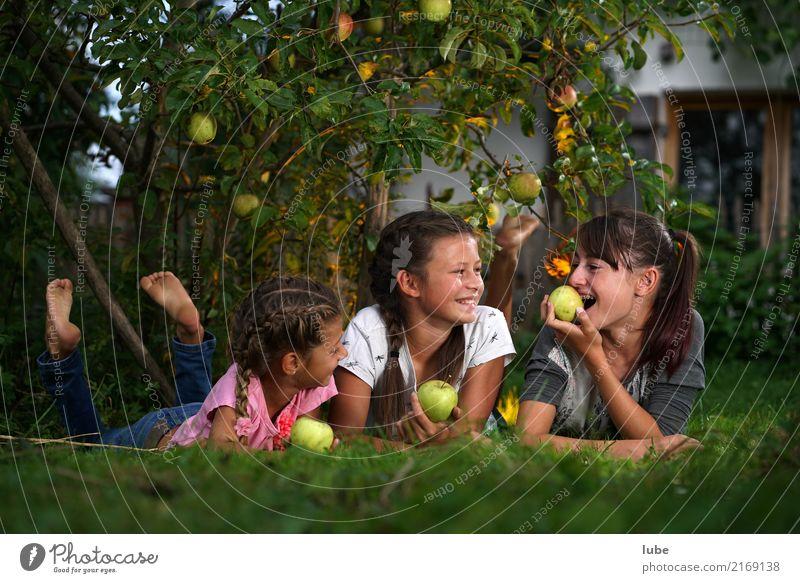 Apfelernte 2 Lebensmittel Frucht Ernährung Essen Gesundheit Landwirtschaft Forstwirtschaft Mädchen Kindheit Umwelt Natur Herbst Garten Wiese Erholung