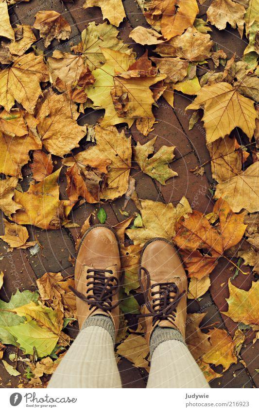 Höst Mensch Natur Blatt Erwachsene Farbe Erholung gelb Herbst Umwelt Beine Stimmung Mode natürlich stehen Wunsch Vergänglichkeit