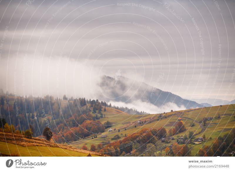 Gebirgsherbstlandschaft mit buntem Wald. Nebelwolken. schön Ferien & Urlaub & Reisen Berge u. Gebirge Haus Umwelt Natur Landschaft Pflanze Himmel Wolken Herbst